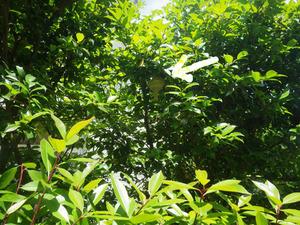 郡山市でスズメバチ駆除の現場-違う方向から.jpg