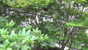 郡山市でスズメバチ駆除の現場.png