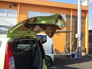 郡山市でハチ駆除の現場.jpg