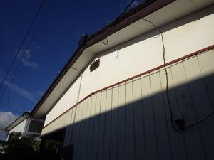 郡山市で屋根裏のスズメバチ駆除.jpg