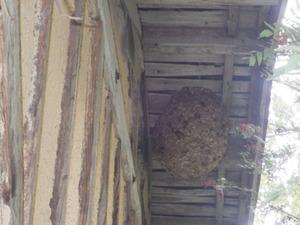 郡山市で農機具庫の軒下のスズメバチの巣.jpg