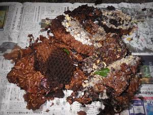 郡山市で駆除した高所のスズメバチの巣.jpg