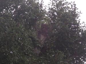 郡山市で高所のスズメバチの巣の撤去跡.jpg