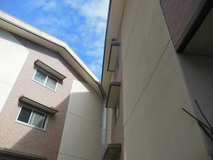 郡山市営アパートの高い所に作ったキイロスズメバチの巣(郡山市、2012年9月5日).jpg