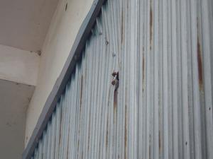 須賀川市で倉庫の壁の穴から出入りするスズメバチの様子.jpg
