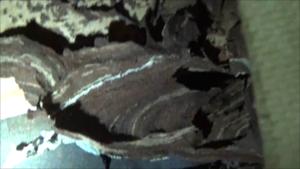 須賀川市で壁の中のスズメバチの巣.png