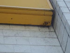 須賀川市で壁の隙間にアシナガバチ集団.jpg