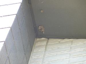 高いところの軒先に作ったフタモンアシナガバチの巣 喜多方市、8月上旬