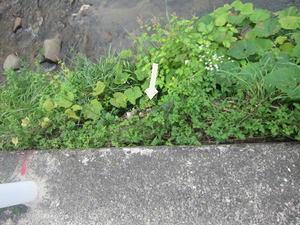 スズメバチの巣があった崖 2011年.jpg